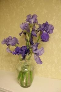 Ammon's Irises