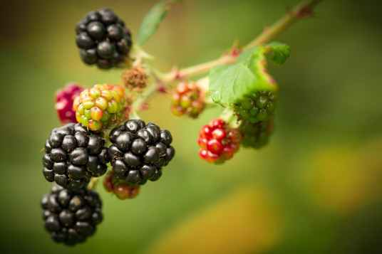 shallow focus photography of berries